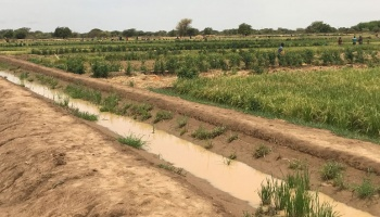 Dry field in Senegal with some green crops in background