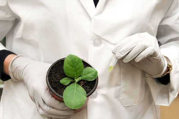 Gloved hands of a researcher holding a young plant specimen in one hand and a pipet in the other.