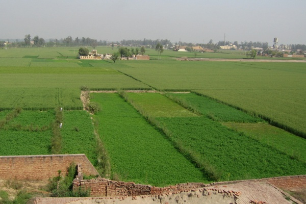 Arial image of lush farms in India - house in the middle